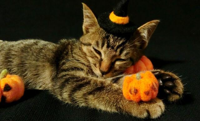 羊毛フェルトリアル猫の目やまぶたの作り方動画まとめ!材料やキットも紹介!