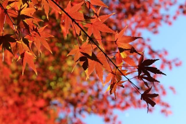 東京で紅葉狩りのおすすめの場所まとめ2019?ライトアップ情報も調べてみた